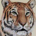 markus-kostka-galerie-tiger